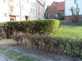 ul. Daszyńskiego